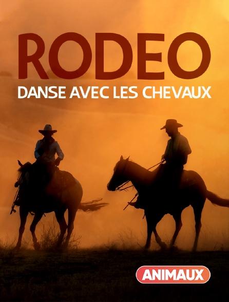 Animaux - Rodéo : danse avec les chevaux