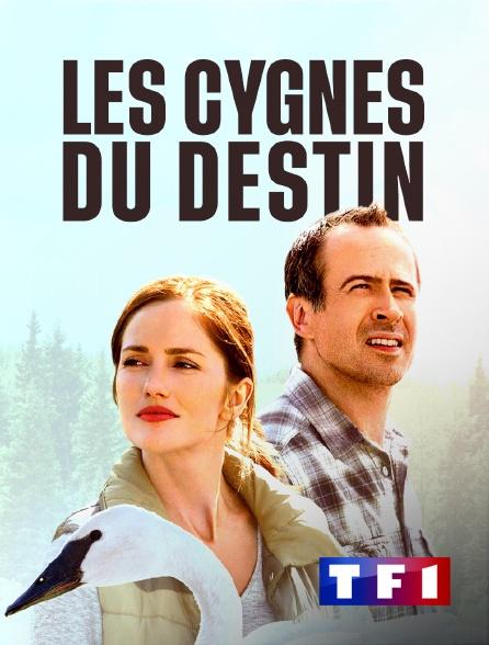 TF1 - Les cygnes du destin