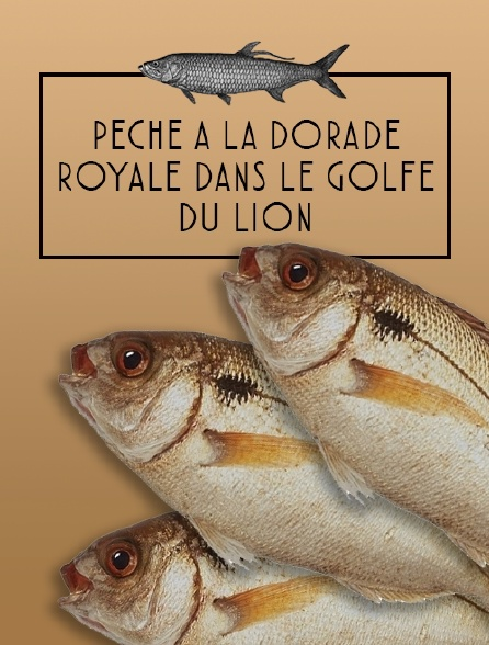 Pêche à la dorade royale dans le Golfe du Lion