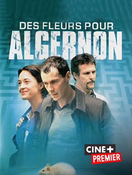 Ciné+ Premier - Des fleurs pour Algernon
