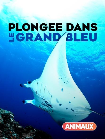 Animaux - Plongée dans le grand bleu