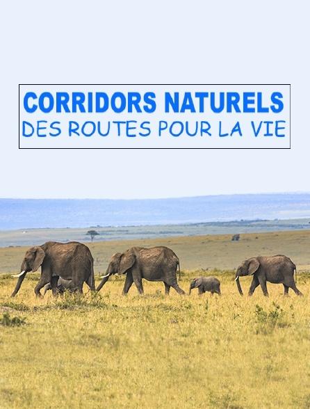 Corridors naturels : des routes pour la vie