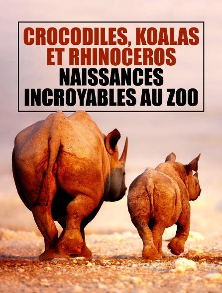 Crocodiles, koalas et rhinocéros : naissances incroyables au zoo