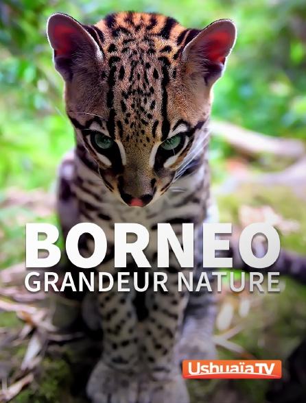 Ushuaïa TV - Bornéo grandeur nature