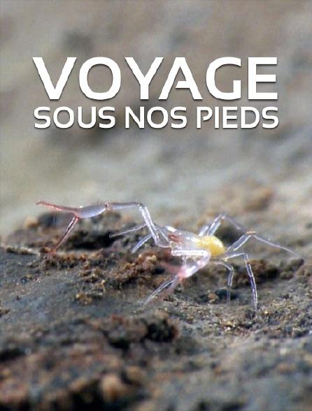 Voyage sous nos pieds