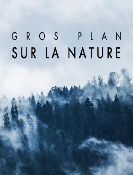 Gros plan sur la nature