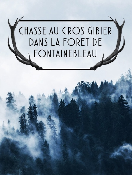 Chasse au gros gibier dans la forêt de Fontainebleau