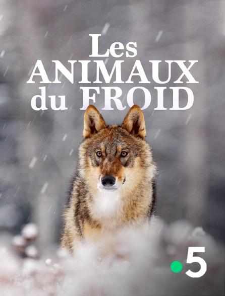 France 5 - Les animaux du froid