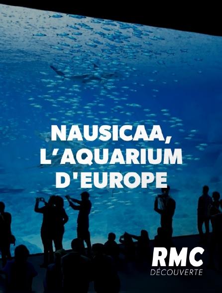 RMC Découverte - Nausicaa, le plus grand aquarium d'Europe