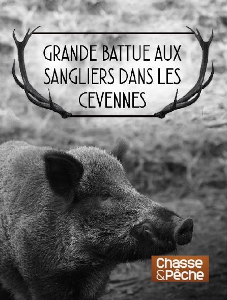 Chasse et pêche - Grande battue aux sangliers dans les Cévennes
