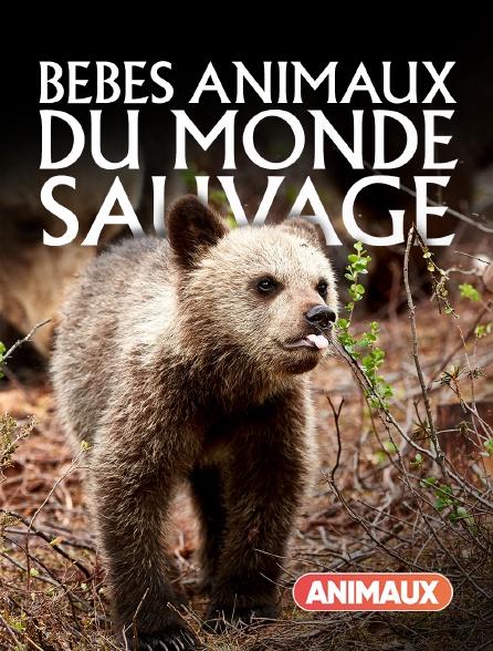 Animaux - Bébés animaux du monde sauvage