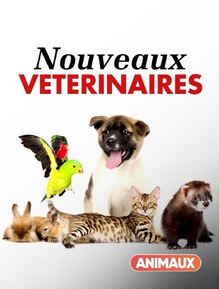 Animaux - Nouveaux vétérinaires