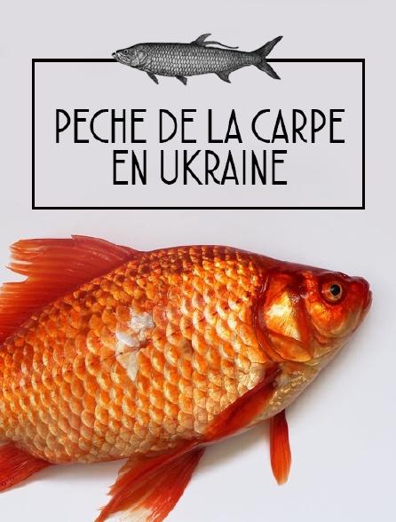 Pêche de la carpe en Ukraine