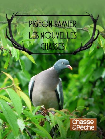 Chasse et pêche - Pigeon ramier, les nouvelles chasses
