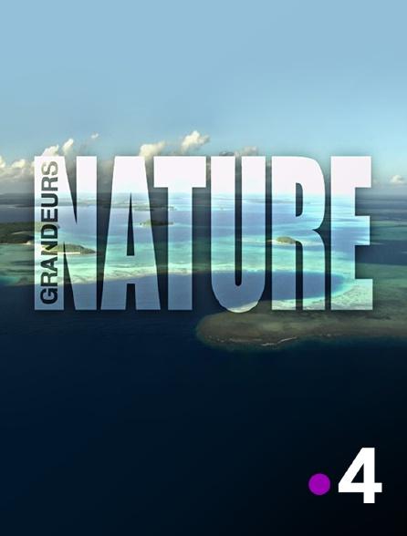 France 4 - Grandeurs nature