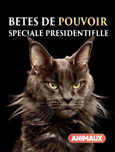 Animaux - Bêtes de pouvoir : spéciale Présidentielle
