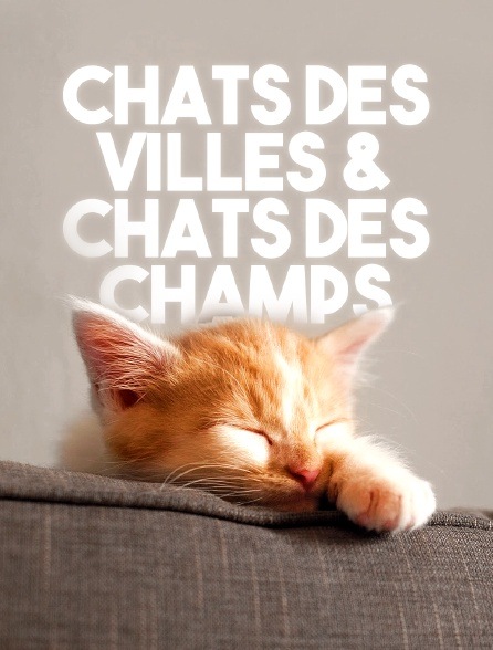 Chats des villes et chats des champs