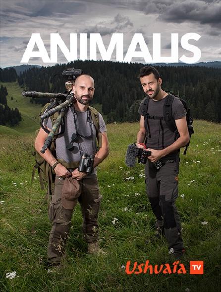 Ushuaïa TV - Animalis