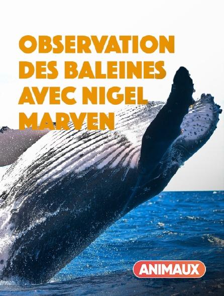 Animaux - Observation des baleines avec Nigel Marven