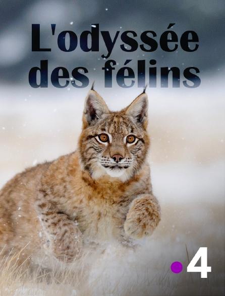 France 4 - L'odyssée des félins