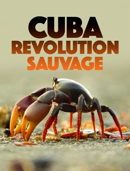 Cuba, révolution sauvage