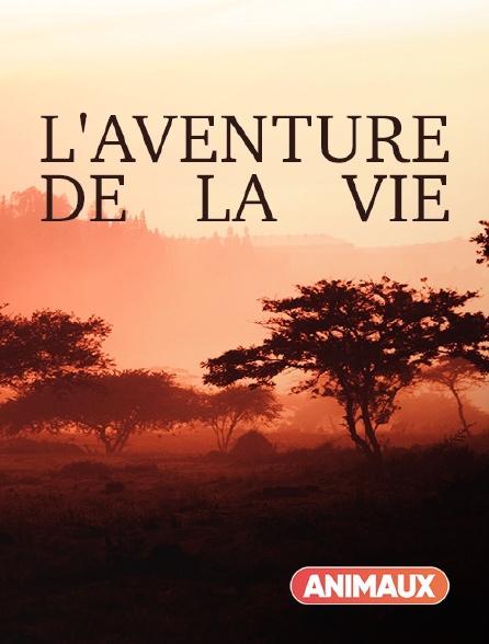 Animaux - L'aventure de la vie