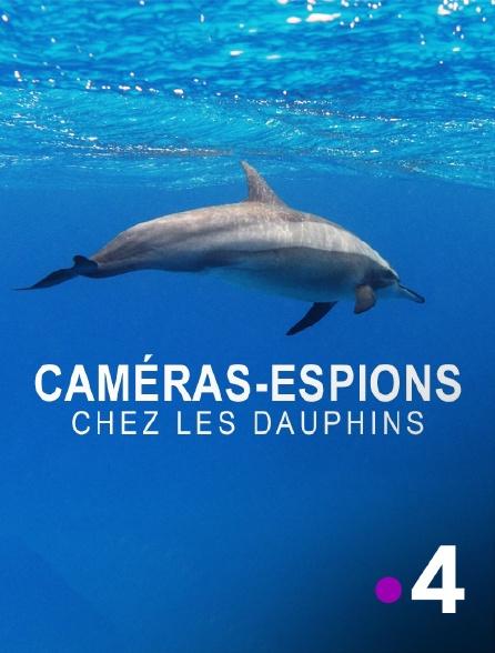 France 4 - Espions chez les dauphins et les orques