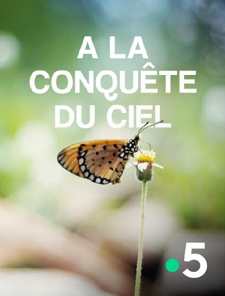 France 5 - A la conquête du ciel