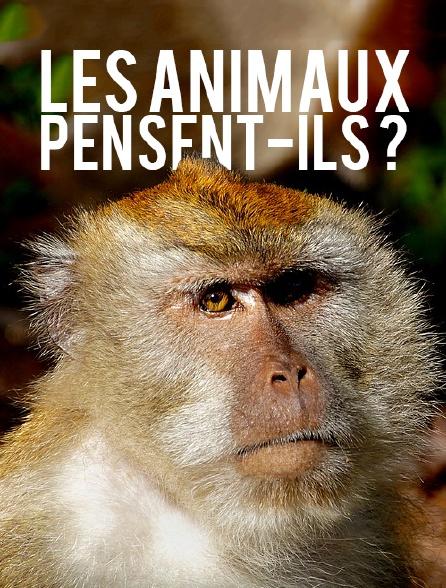 Les animaux pensent-ils ?
