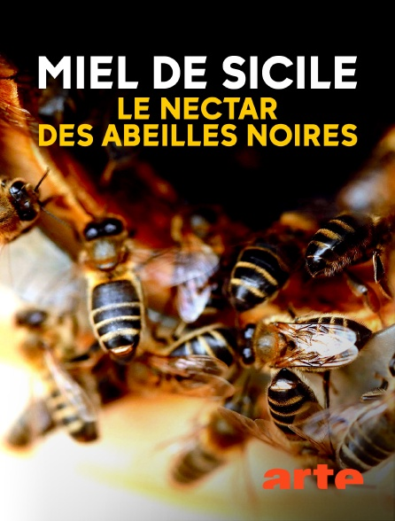 Arte - Miel de Sicile, le nectar des abeilles noires