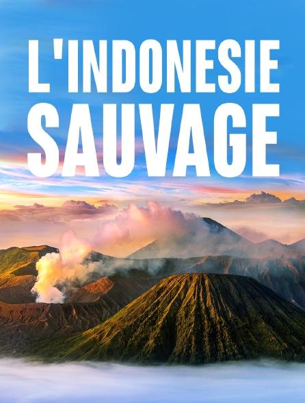 L'Indonésie sauvage