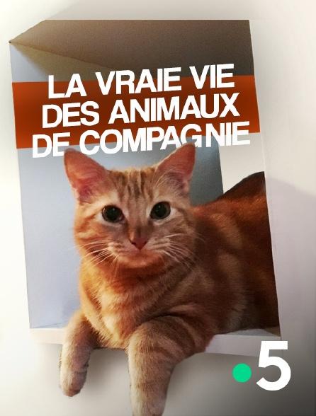 France 5 - La vraie vie des animaux de compagnie
