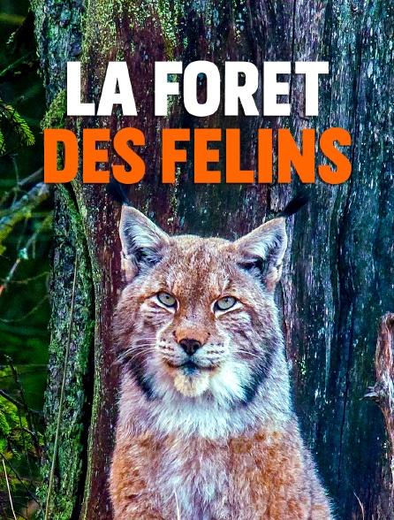 La forêt des félins