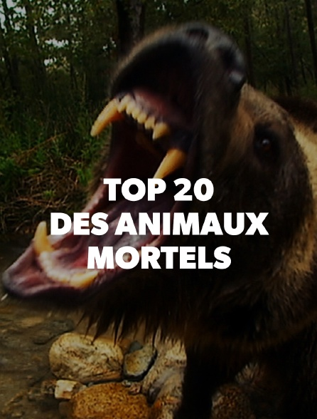 Top 20 des animaux mortels