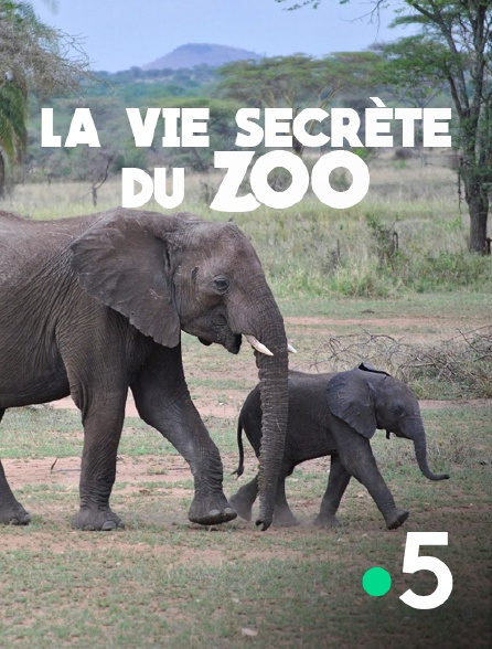 France 5 - La vie secrète du zoo