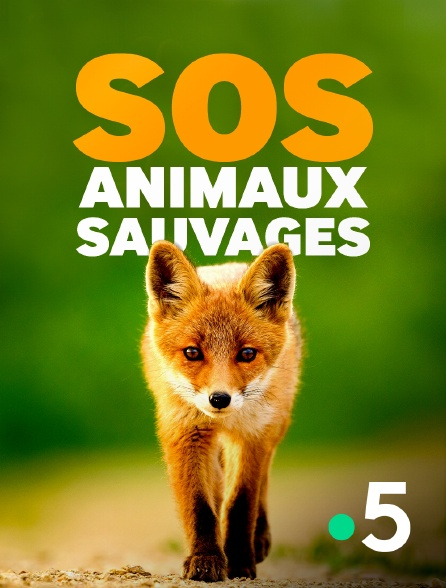 France 5 - SOS animaux sauvages