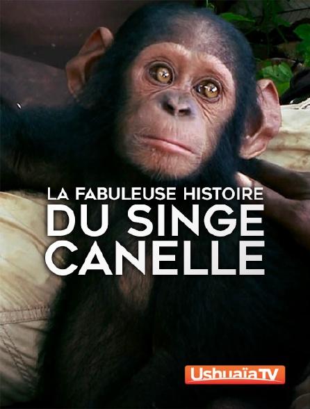 Ushuaïa TV - La fabuleuse histoire du singe Canelle