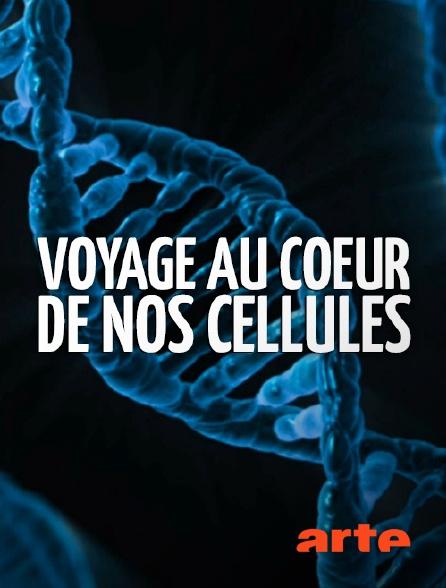 Arte - Voyage au coeur de nos cellules