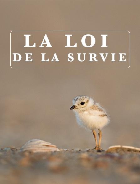 La loi de la survie