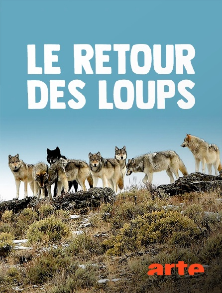 Arte - Le retour des loups