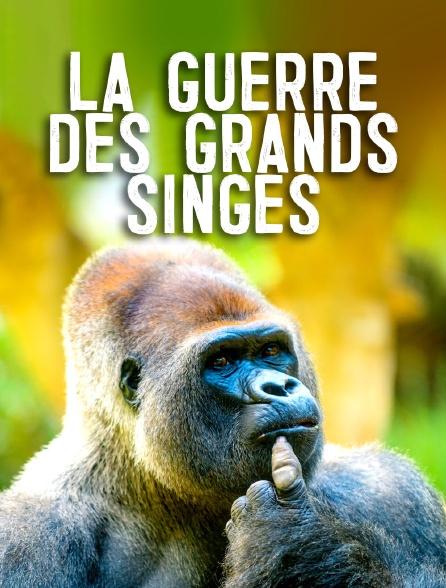 La guerre des grands singes