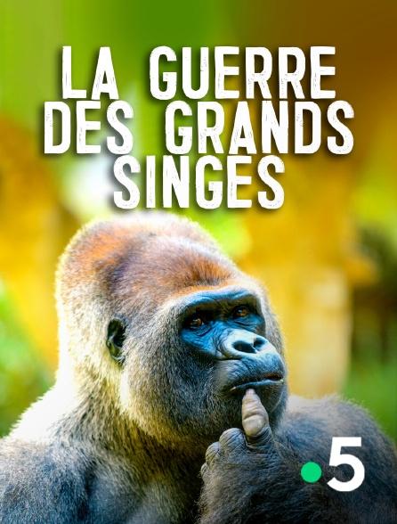 France 5 - La guerre des grands singes