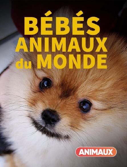 Animaux - Bébés animaux du monde
