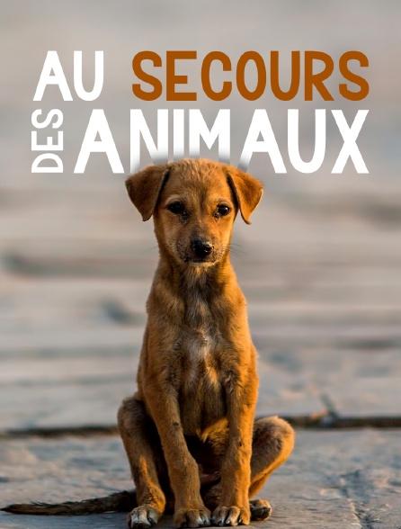 Au secours des animaux