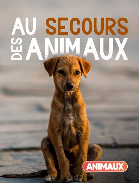 Animaux - Au secours des animaux