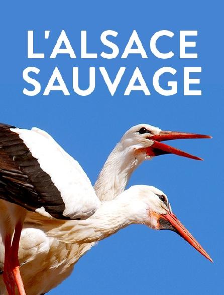 L'Alsace sauvage