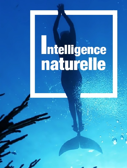 Intelligence naturelle