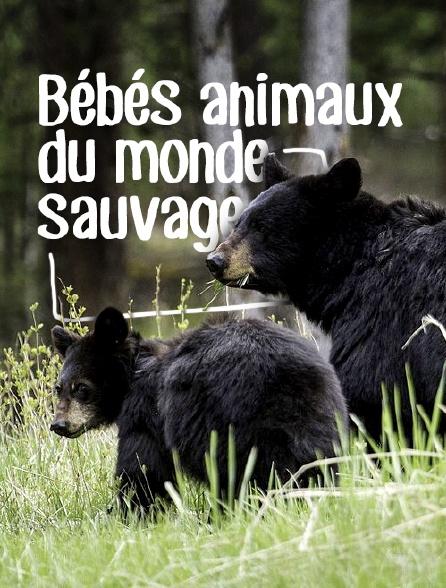 Bébés animaux du monde sauvage
