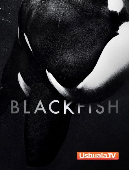 Ushuaïa TV - Blackfish : L'orque tueuse
