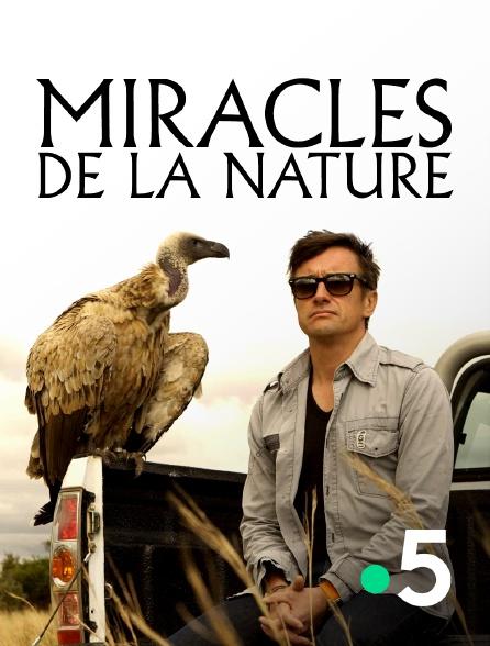 France 5 - Miracles de la nature